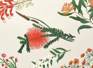 watercolors of Australian flowers