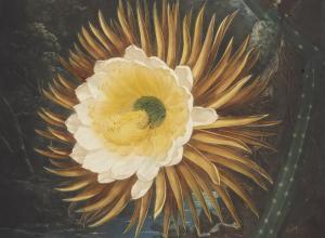 The Night-Blooming Cereus illustration