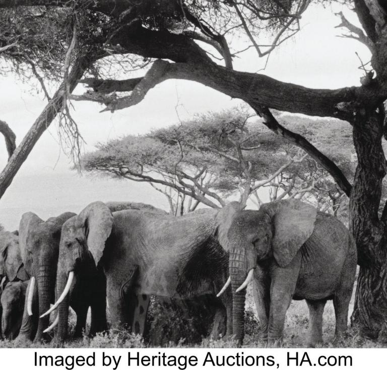 Peter Beard Elephants